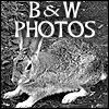 Black and White Photography Gallery